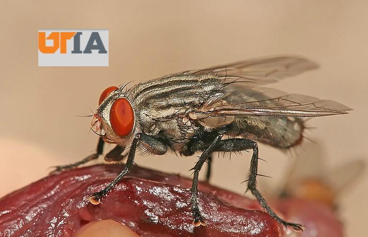 Entomologi Forensik - Beberapa Fakta Akan Diungkap